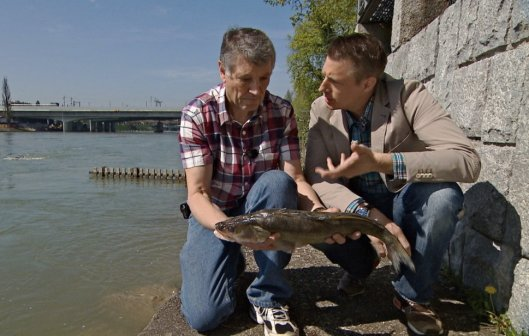 Frisch aus dem Rhein: Galgenfischer Roland Frank und Spitzenkoch Ivo Adam mit dem Zander, den sie nun filetieren, braten und essen werden.