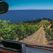 Domaine Pieretti, Cap Corse