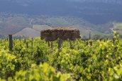 160711_Bonvinvant_Korsika_Marie-Francoise_Devichi_Patrimonio-9_web