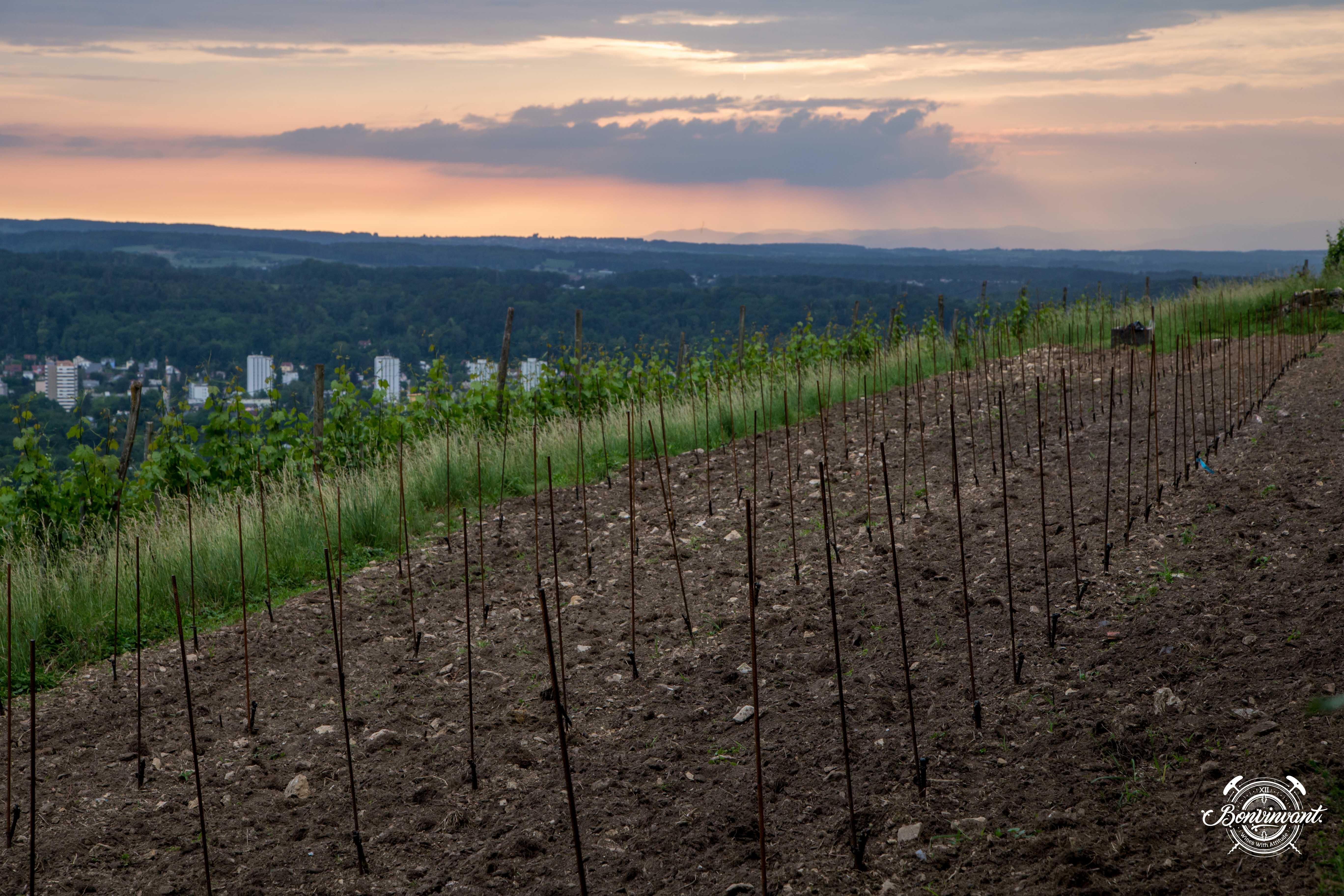 180531_Quergut_Steinbruch_Bioweinpreis_BVNT_web-11