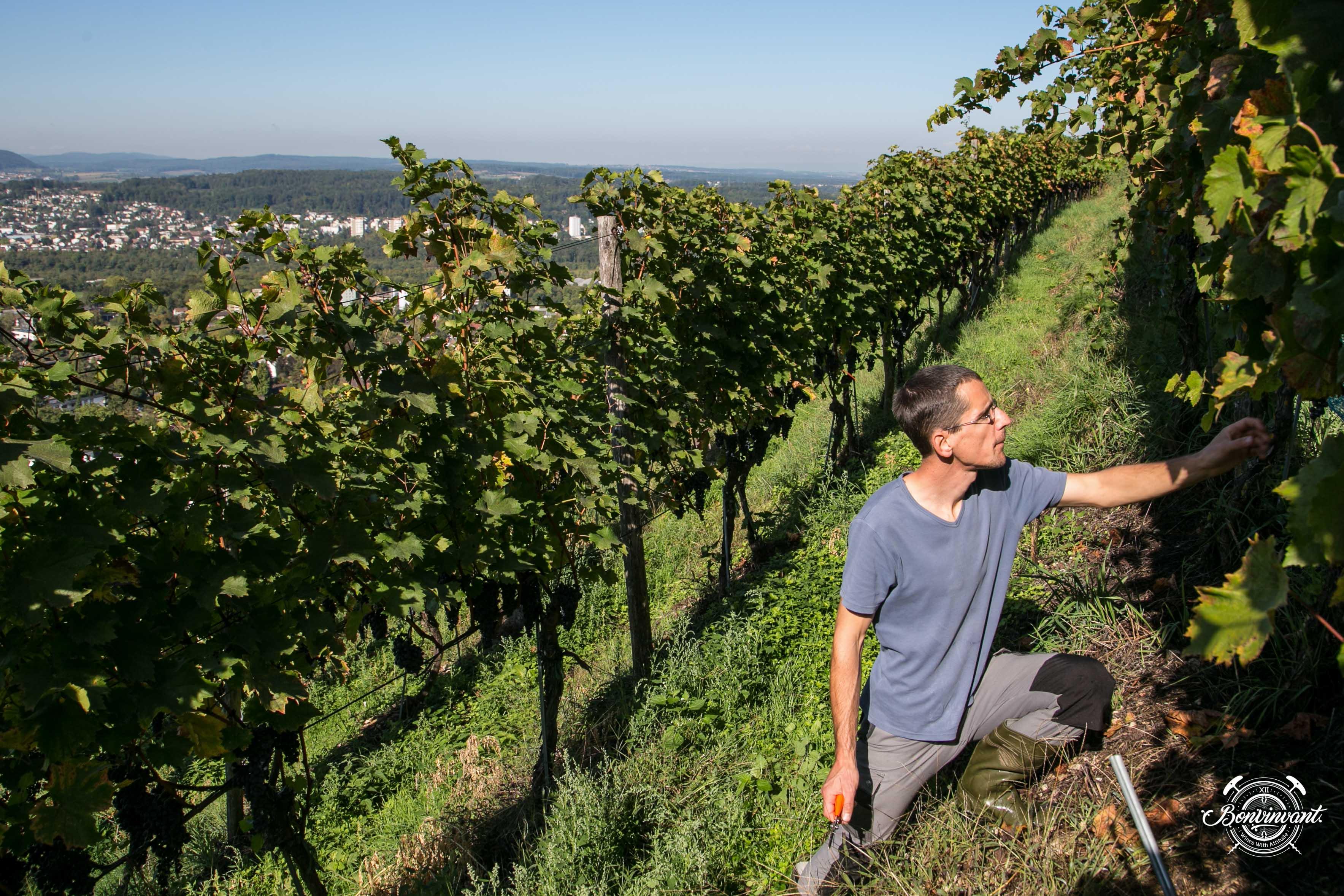 180531_Quergut_Steinbruch_Bioweinpreis_BVNT_web-3