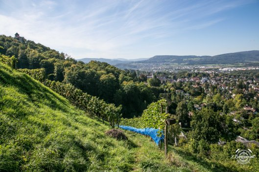 180531_Quergut_Steinbruch_Bioweinpreis_BVNT_web-6