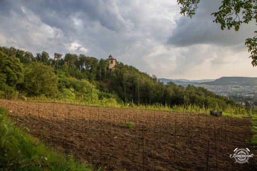 180531_Quergut_Steinbruch_Bioweinpreis_BVNT_web-9