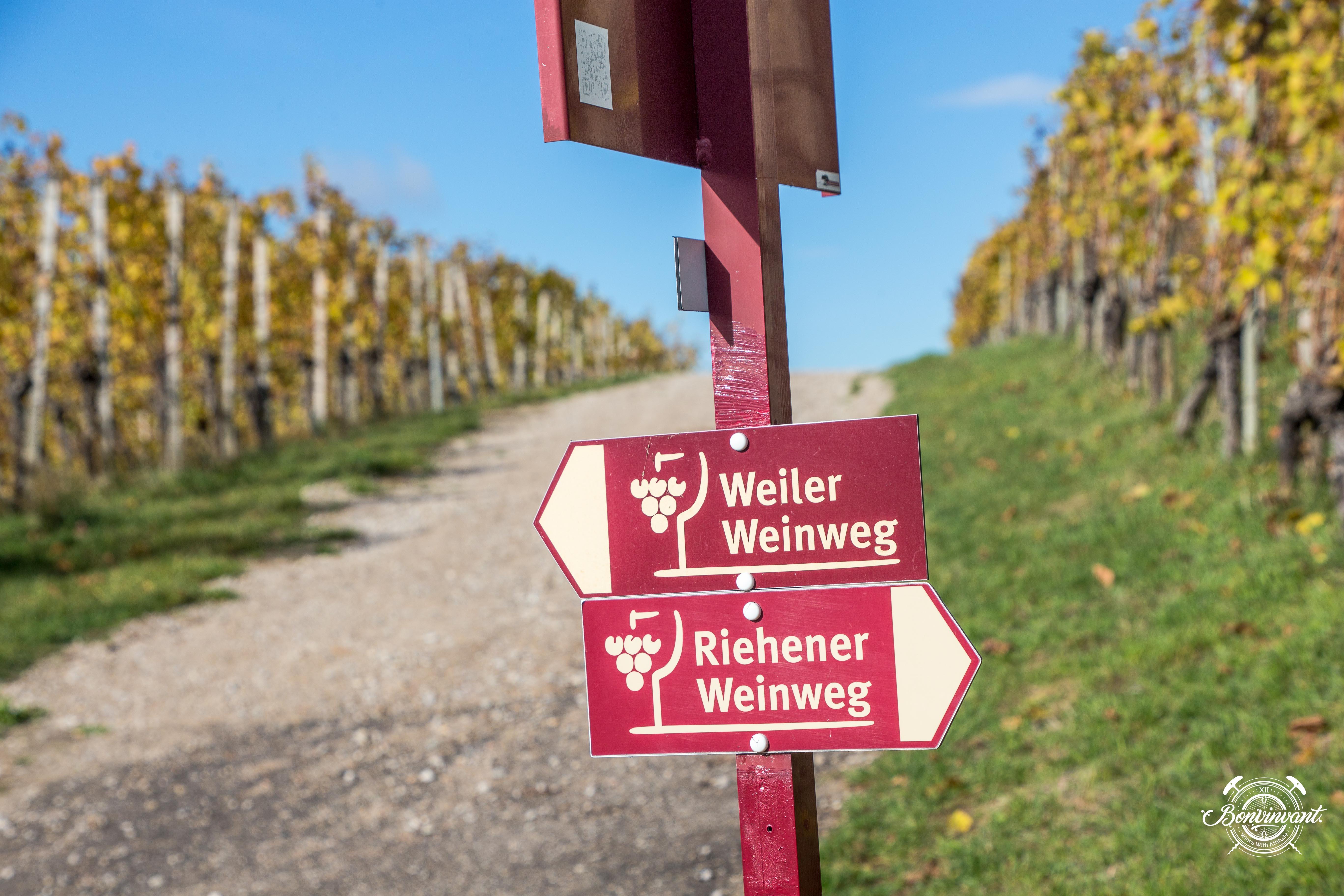 Weiler_Schlipf_08.11.2018_BVNT_web-23